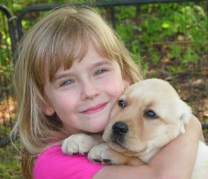 little girl hugging her new labrador puppy