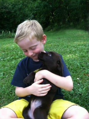 chocolate labrador puppy with a little boy