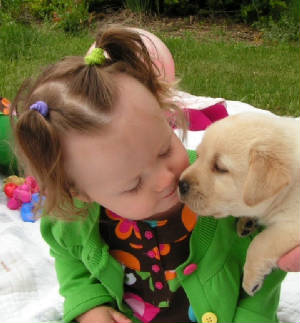 Baby girl kissing yellow labrador puppy