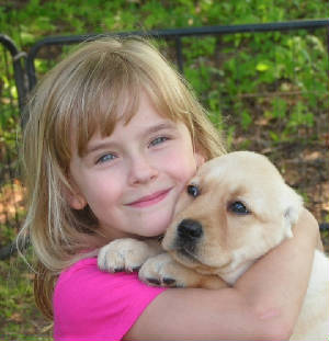 little girl hugging her new yellow labrador puppy